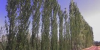 Fábrica Gonzalez Reeds (6)